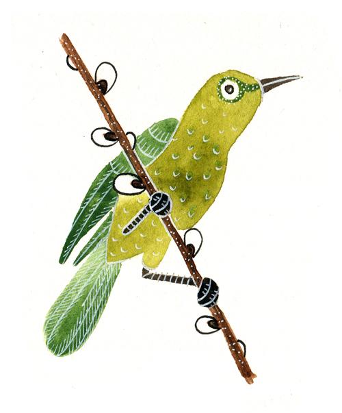 zelený ptáček copy